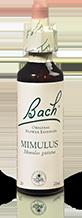 Mimulus-img